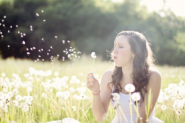 dandelions-609253_640