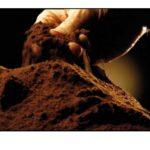 """Czy alternatywą dla """"prawdziwej"""" małej czarnej może być wersja bezkofeinowa?"""